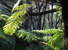Fern tree leaves