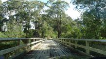 A sturdy bridge
