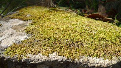Dehydrated moss - it's really dry at the moment