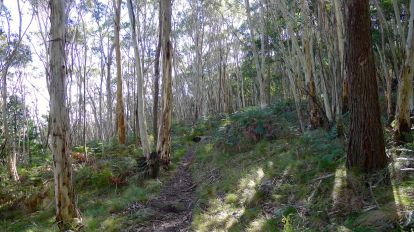 Different eucalypts near the top