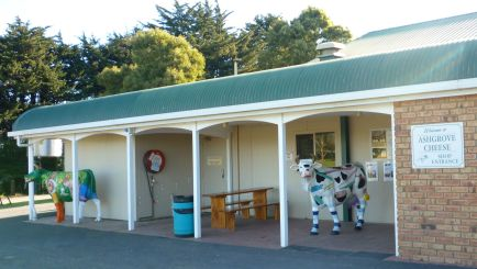 Cows by the front door of Ashgrove Cheese Factory
