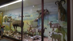 Taxidermied animals from the Eurasian region
