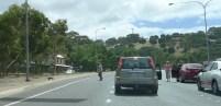 Koala running off road