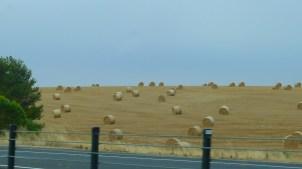 Lots of hay bales