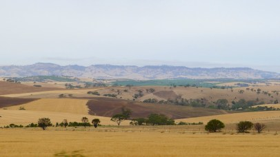 On the way back to Adelaide from Maggie Beer's @ Nurioopta - the Barossa