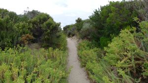 The path through the dune behind Oberon Bay