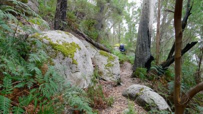 7/15 More mossy boulders - we're not out of the woods yet