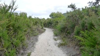 12/18 A sandy path now