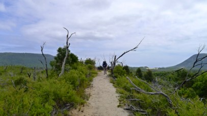 5/8 The path rises above the surrounding vegetation. I'm glad we're not walking this on a hot, sunny day