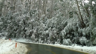 Snow covered trees - not something you get in Queensland where I grew up