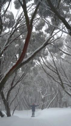 Under the snow gums