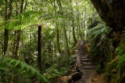 Rainforest in the Jamison Valley near Katoomba Falls
