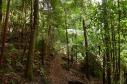 Beautiful, bird-filled forest along the Dardanelles Pass Walking Track