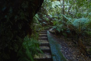 Ferns thrive in this wet gully that has low light conditions for most of the day