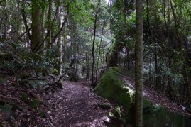 Heading into Leura Forest with its mossy rocks and clear understorey