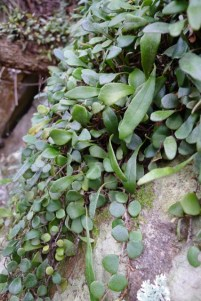 Plants growing on a boulder by the path