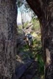 Razorback Track, Cathedral Range State Park