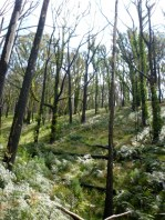 Sep 2010 - At the top of Jawbone Creek, it's very green and even the trees are starting to green up