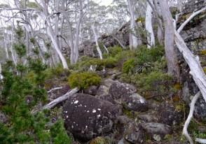 Looking back, it's a reasonably steep path, but the rocks make it easier