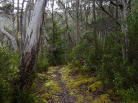 Lush, green, wet sclerophyll forest