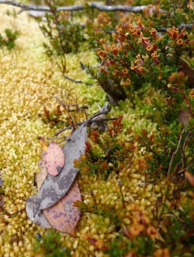 Moss and heath (Epacris spp, I think)
