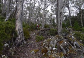 Starting up through the greyed forest 'short cut' back towards Fenton Lake Carkpark