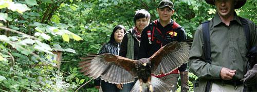 hawk-walk