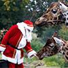 visit santa venues dublin zoo