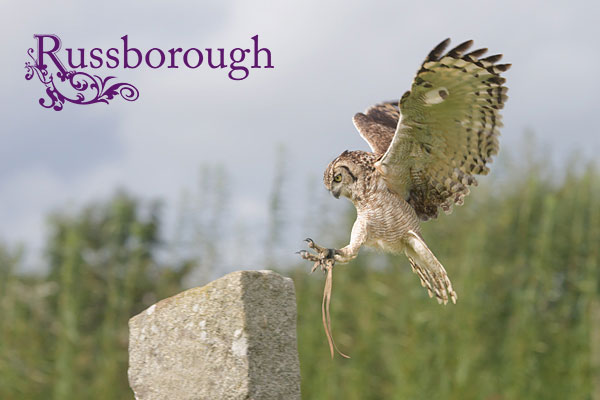 Russborough-Bird-of-Prey