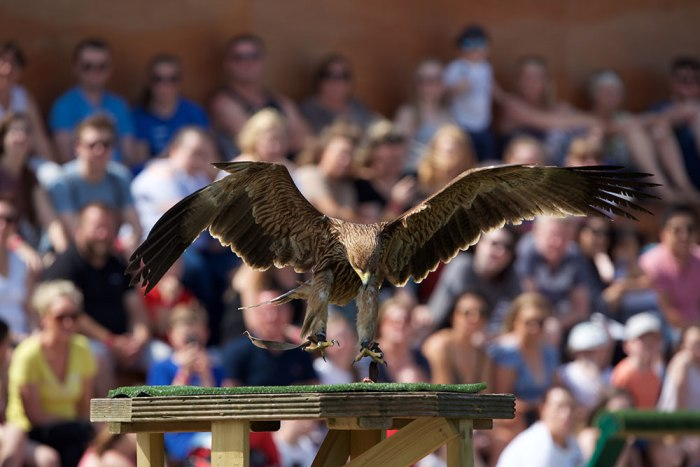 Tayto Park launches 'World of Raptors' attraction