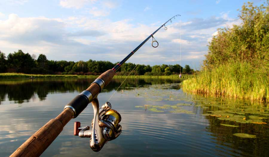 Lower the Rod Again to reel in fish