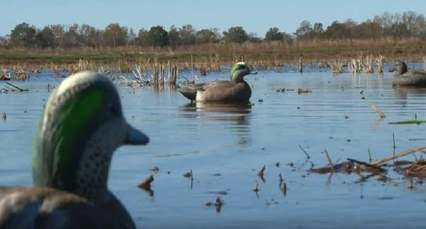 duck decoy tips