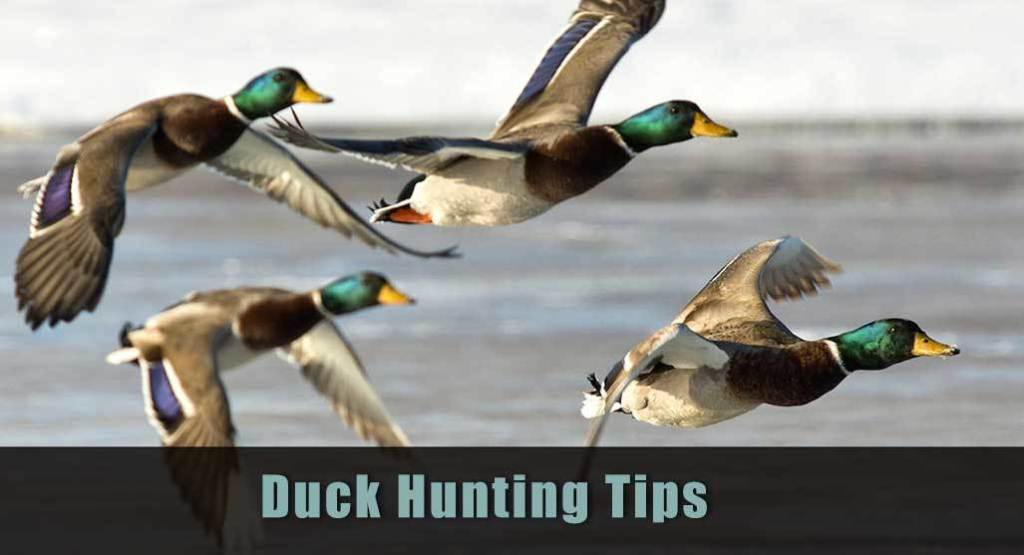 Duck Hunting 101 for beginners tips and Guide