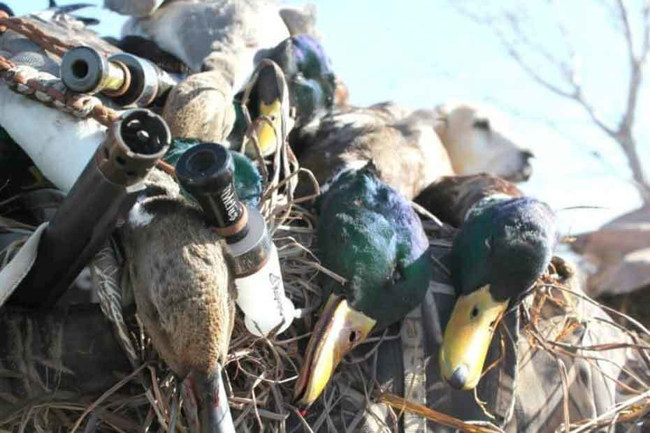 How to Use Duck Calls Effectively