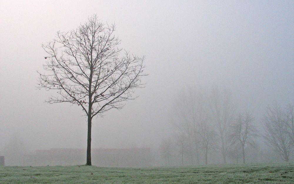 霧中的枯樹