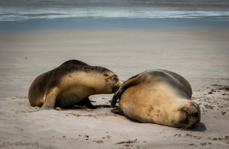 Seals - Seal Bay
