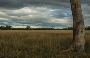 australian-bush-clouds