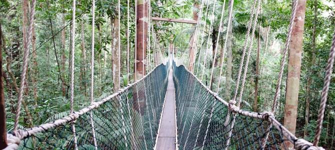 Taman Negara NP- der älteste Dschungel der Welt & der Schabrackentapir