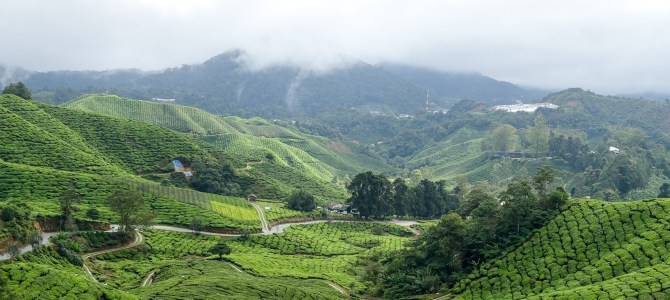 Cameron Highlands – Tee 2.0