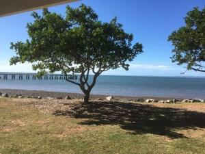 small tree near the beach