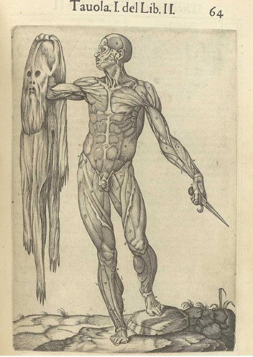 Deeply creepy 16th century  Anatomy drawing