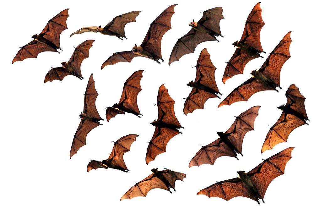 Bat Group Inc