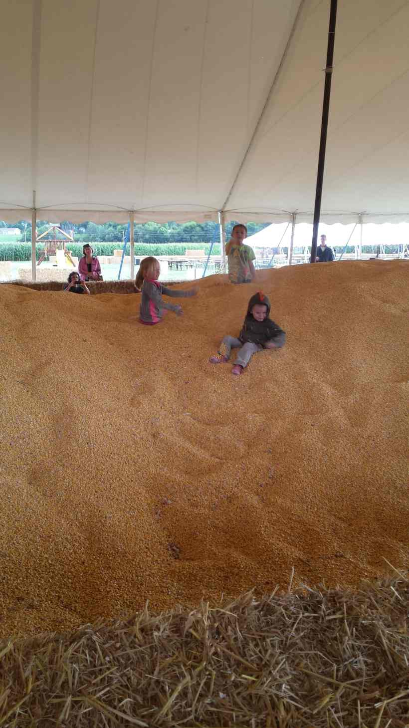 Severs Corn Maze Corn Pit