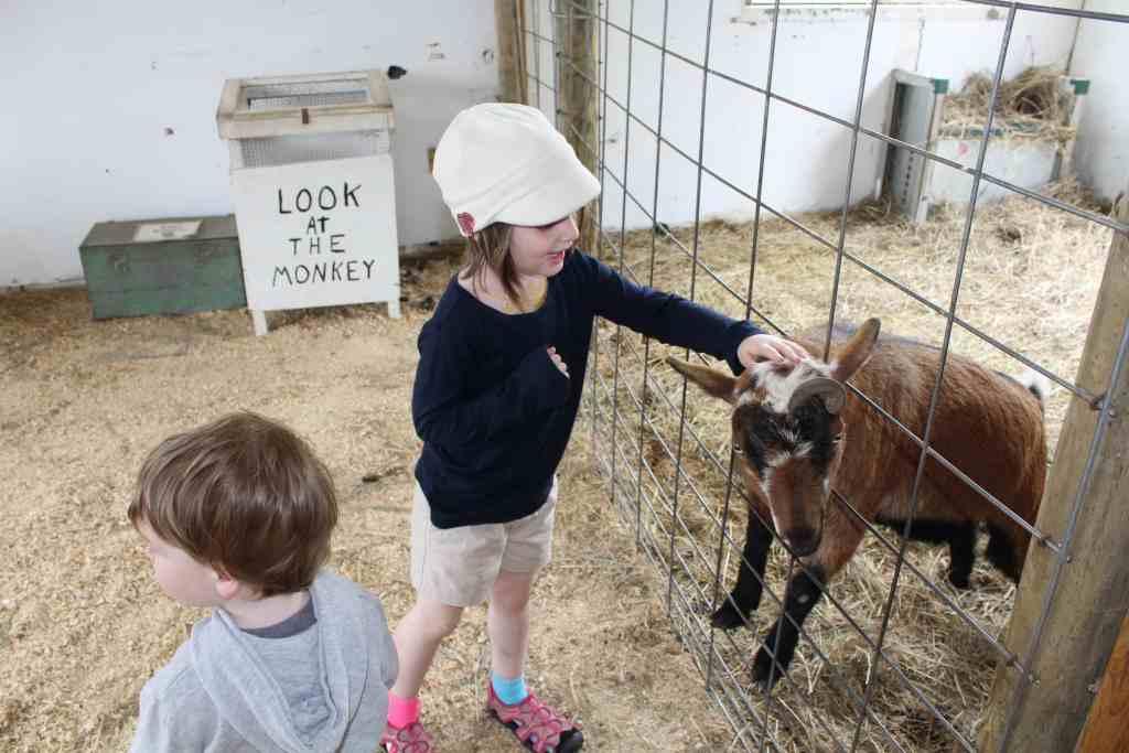 Petting Zoo at Paul Bunyand Land