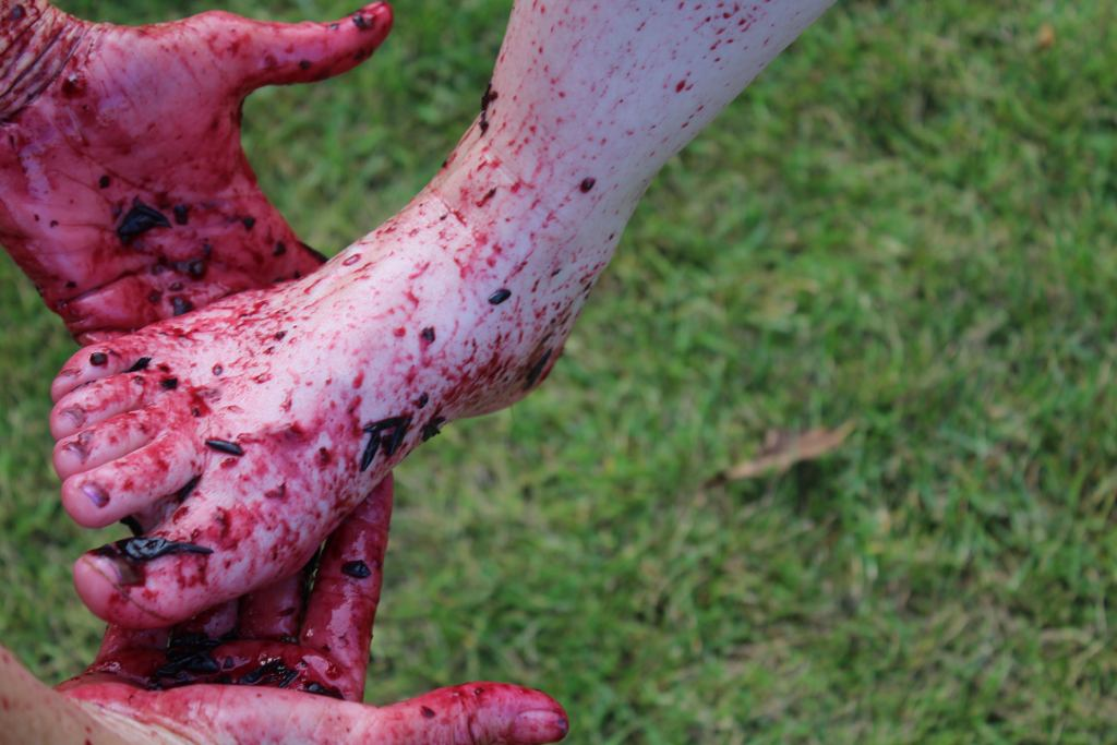 The Aftermath from a grape stomp.