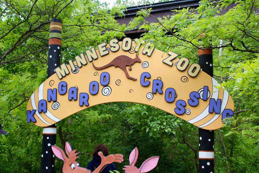 Kangaroo Crossing at the Minnesota Zoo