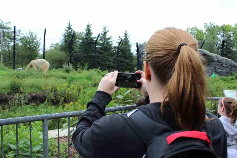 Polar Bear Exhibit at the Como Zoo