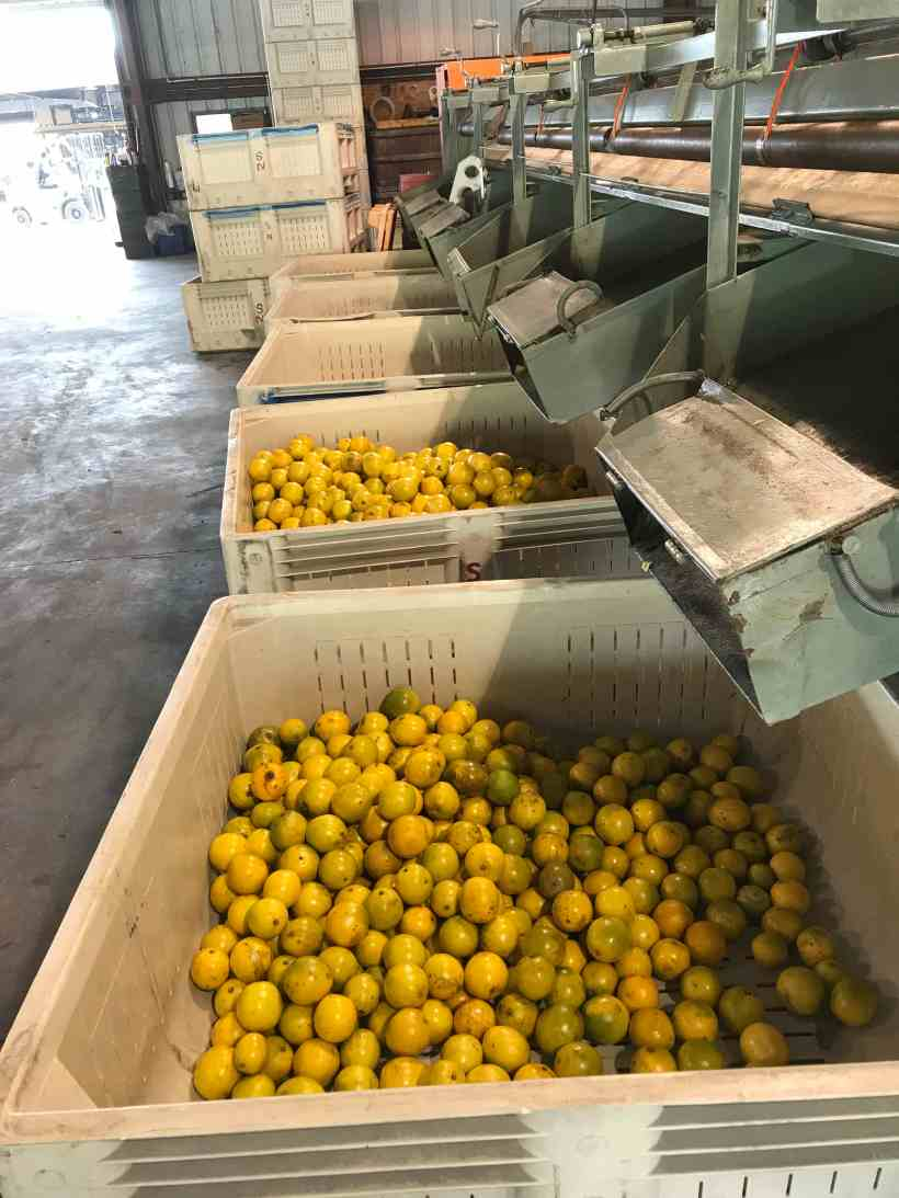 Citrus Manufacturing and Sorting in Naples FL