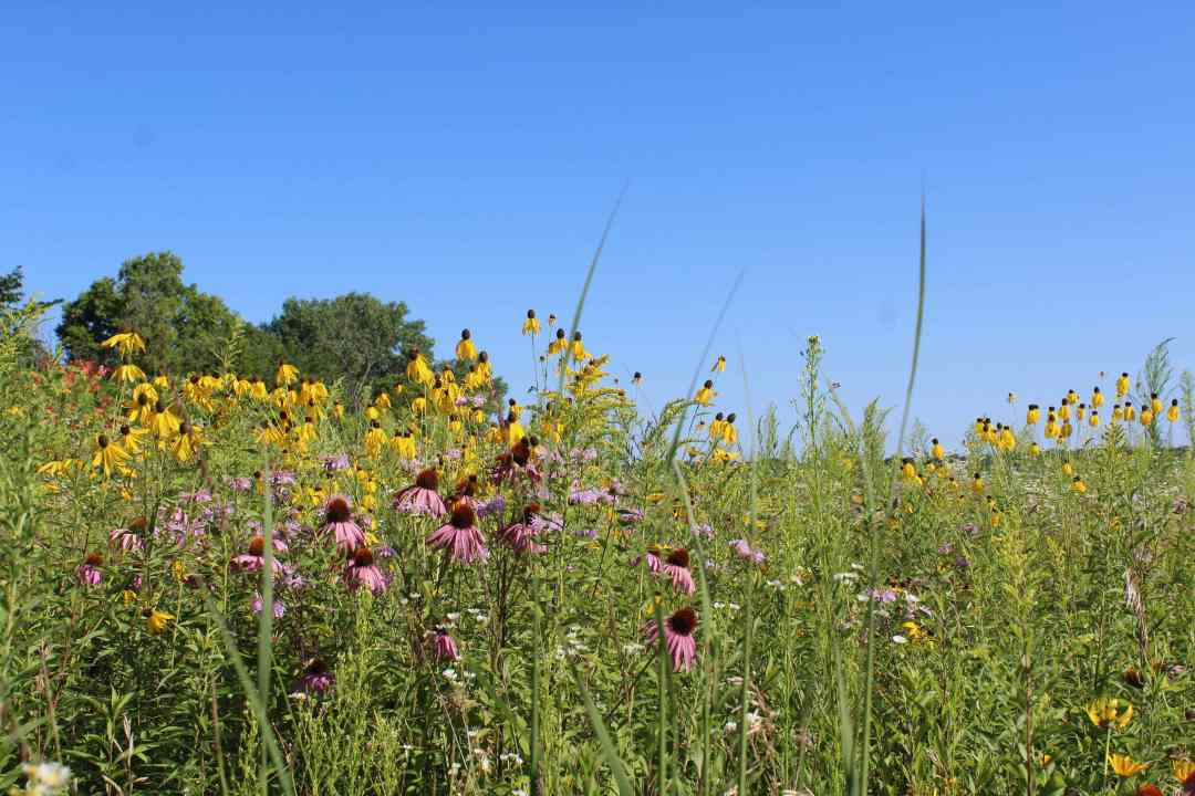 Top things to do in Minnesota this Spring