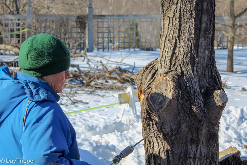 Tapping into a Tree for Syrup